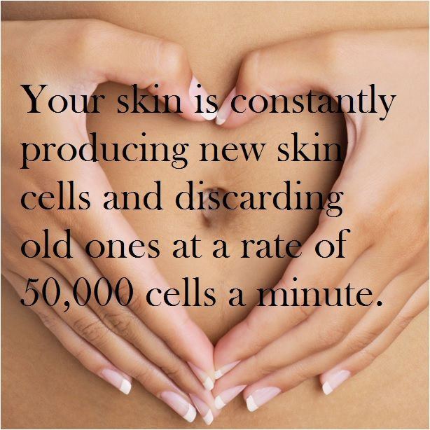 Skin tip from Dr. Rueckl, Lakes Dermatology. #skincells #cellturnover #skinfacts