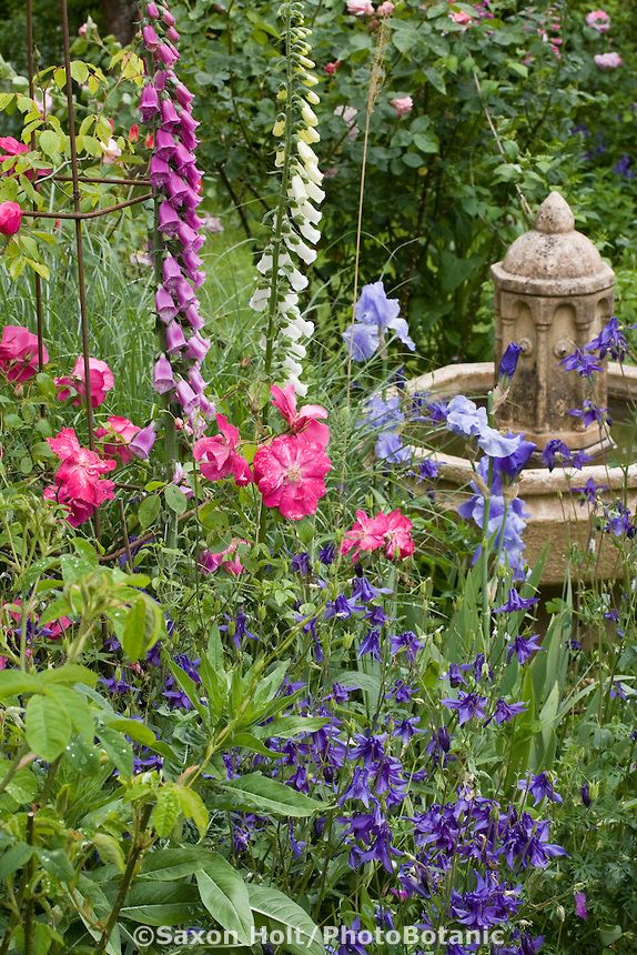 Country cottage garden .