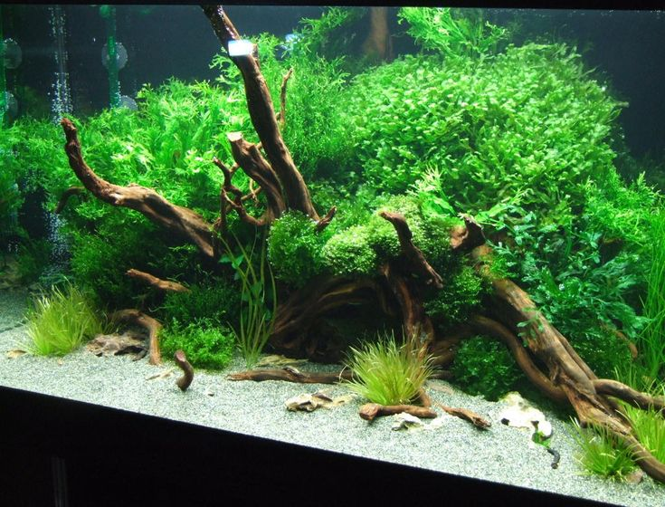 Aquarium Ideen Innenarchitektur Ger Umiges Aquarium Einrichtung