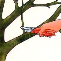 Baumschnitt alter Obstbäume im Garten, warten Sie die Winterruhe ab