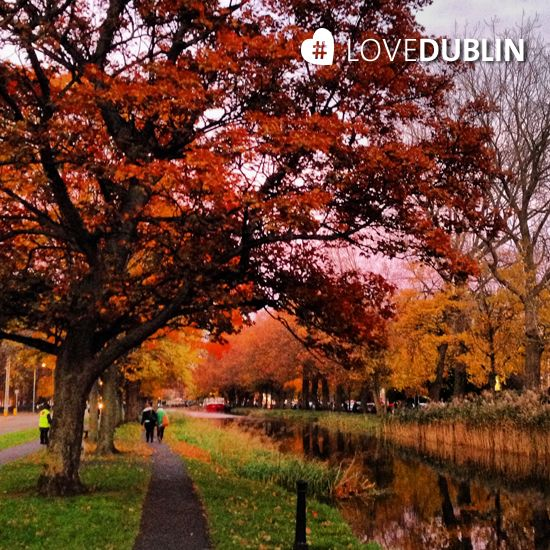 The rich colours of Dublin's Grand Canal expertly captured by @sarahk81 http://bit.ly/1AruijU #LoveDublin