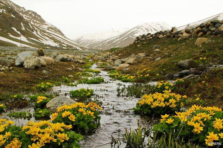 Cennet Vadi İkizdere'den Kareler Fotoğraflar: Emine Ekşi