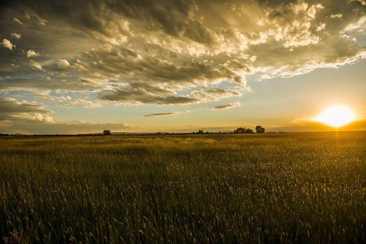Awesome sunset in a field at Laramie, Wyoming - #funny #lol #viralvids #funnypics #EarthPorn more at: http://www.smellifish.com