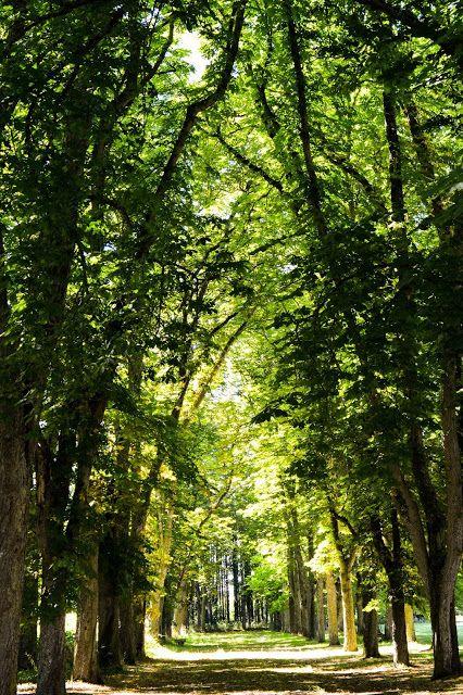 France, Loire Valley - Château de Serrant V (The Woods)