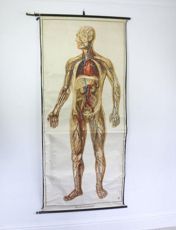 25 Best Anatomical Illustrations Images On Pinterest Human Anatomy