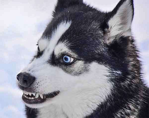 32 Animals With Amazing Eye Colors Red Yellow Green Blue Etc