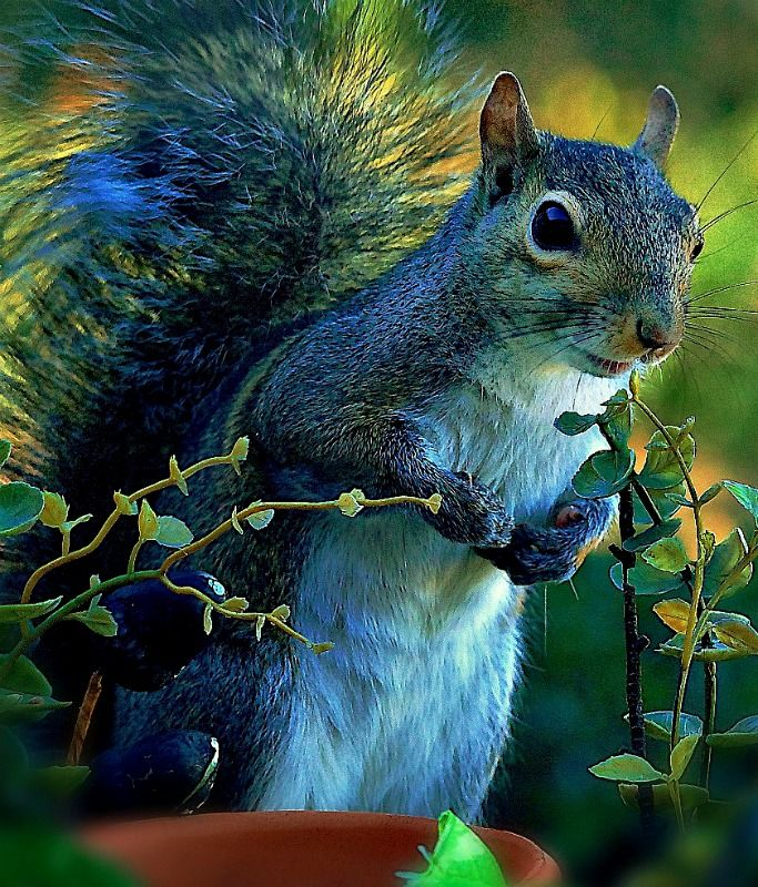 249 best Squirrels images on Pinterest | Adorable animals, Squirrels ...