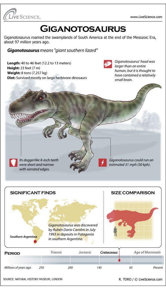 Infographic: Dinosaur profile of the giant carnivorous dinosaur Giganotosaurus.