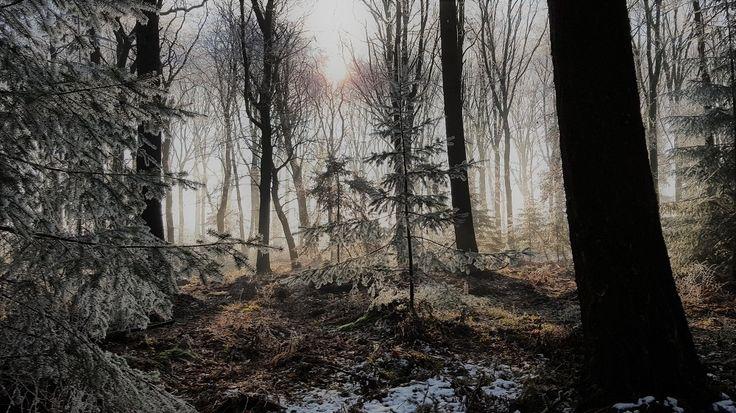 Magisch dit te zien in het dichte bos. Het zonlicht wat op de besneeuwde sparren schijnt.