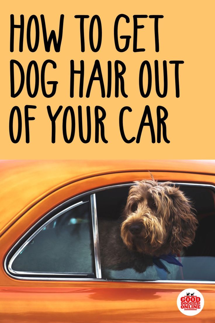 How to get dog hair out of your car dog hair removal