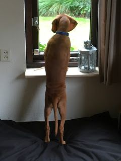 NATUURlijk de Veluwe: Onze hond