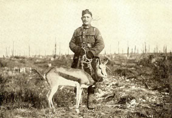 Nancy, a sprinbok, the mascot of the 4th South African Scottish Infantry Regiment in Delville Wood Feb 1918. Nancy's record is remarkable for she was to accompany her regiment in Egypt, France, Flanders through WW1 from 1915 until after Armistice. Nancy died in Belgium on 26th Nov 1918 and was buried with full military honours in the cemetery of the village of Hermeton-sur-Meuse. Sent to a taxidermist, she is on display at the National Museum of Military History in Johannesburg.