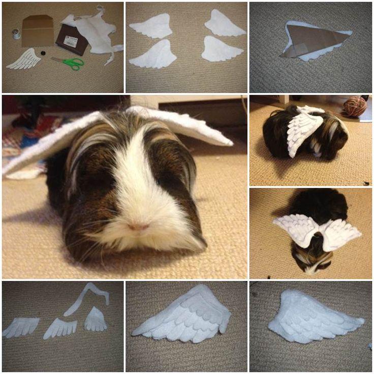 704 Best Images About Guinea Pigs On Pinterest Rabbit