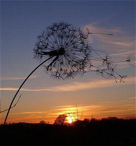 Une fleur de pissenlit géante, en fil de fer, qui peut tourner avec le vent Sur le site de l'artiste, des fées, et le pas-à-pas pour faire la sienne... Merci !:
