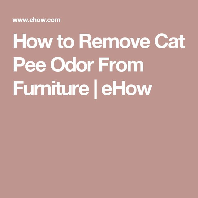how to remove the smell of cat urine from leather