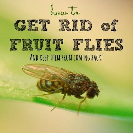 You don't just need to know how to kill fruit flies, you need to prevent them from entering your home. These all-natural methods will get you fly-free fast!