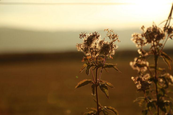 SEPT 14. sunset...