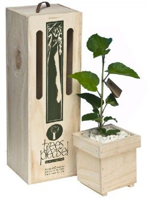 Flowering tree gifts Hibiscus online gifts delivered NZ