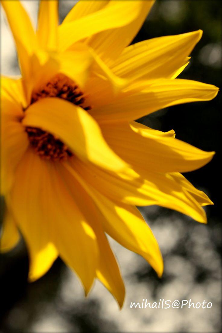 Flowers... Hope by msitarus on Etsy