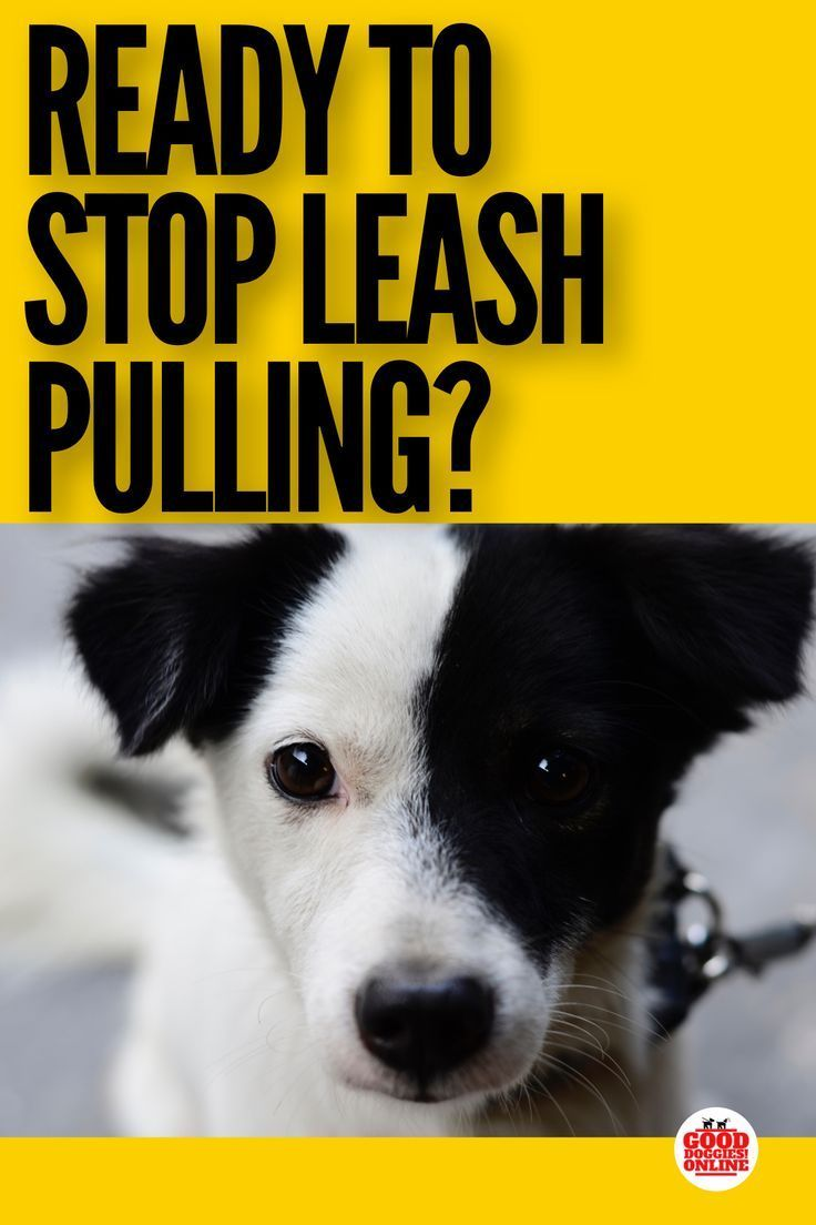 Stop Your Dog Pulling On The Leash With These Dog Obedience