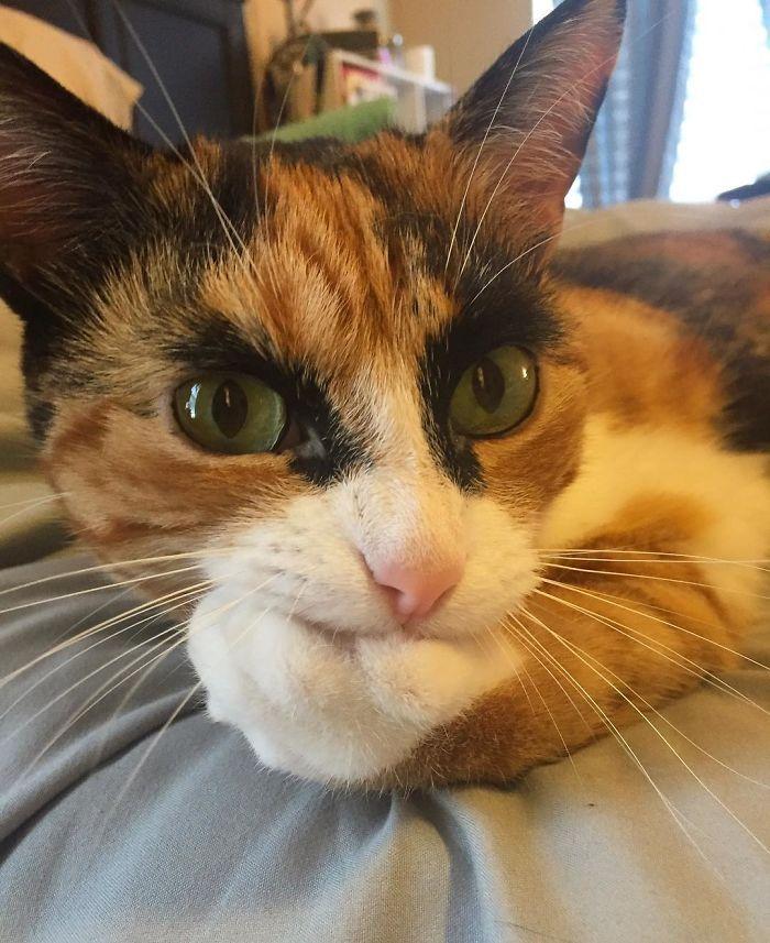 Faites la connaissance de Lilly, ce chat aux « yeux fous » qui donne l'impression de vous juger sans arrêt avec ses faux sourcils