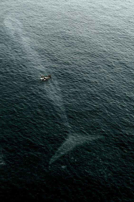 Blue whale swimming just below the surface of a small boat!