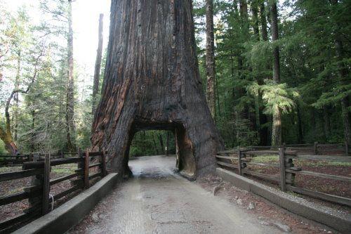 Drive-Thru Redwood. | California Landmarks | Pinterest ...