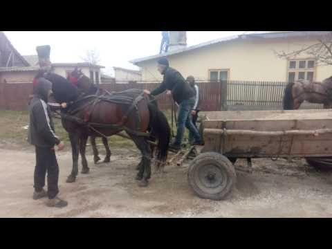Caii lui jircanel - YouTube