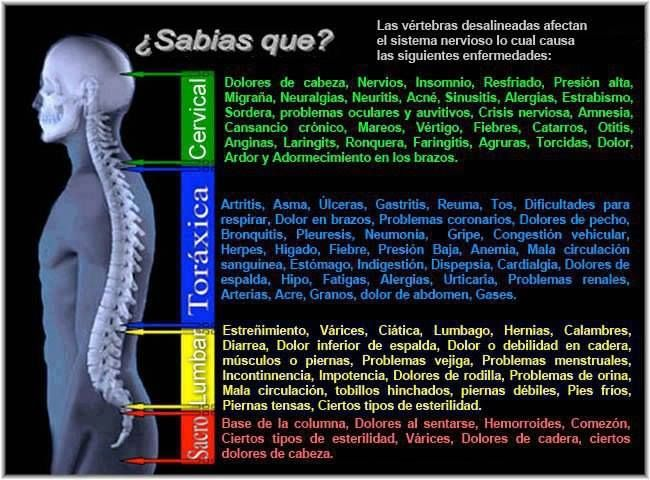 10 best anatomia y fisiologia images on Pinterest | Ayurveda ...