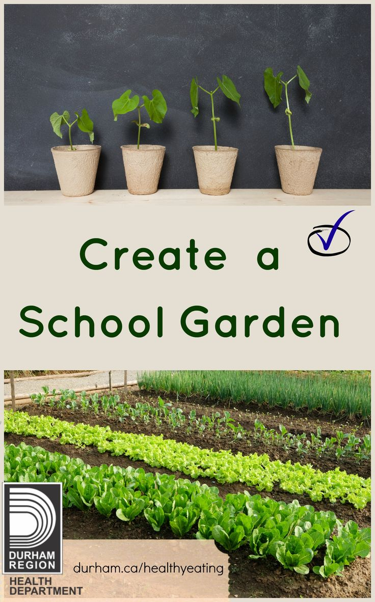 Creating a vegetable garden at your school can be a great platform for student engagement and learning. It can provide learning about healthy eating, science, the environment and help increase a student's motivation to learn. Check out our 'Guide to School Gardens'!