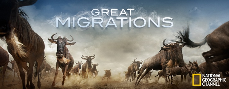"Amazing and ""Great Migrations"""