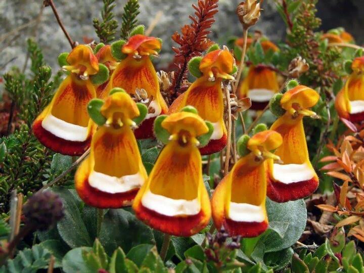 17 best images about flores exoticas on pinterest portal - Flores tropicales fotos ...