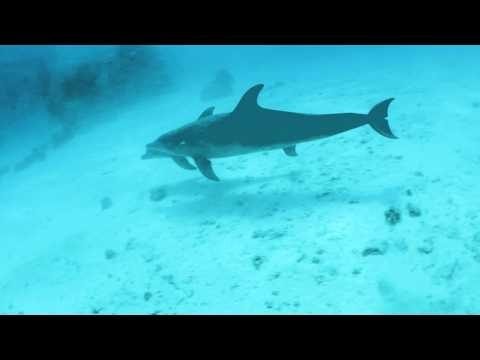 Diving in El Gouna Red Sea with Easy Divers Academy- Dolphins in Siyul Kebir
