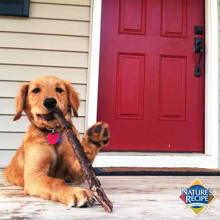 Penny's my name, and fetch is my game. #Penny #Puppy