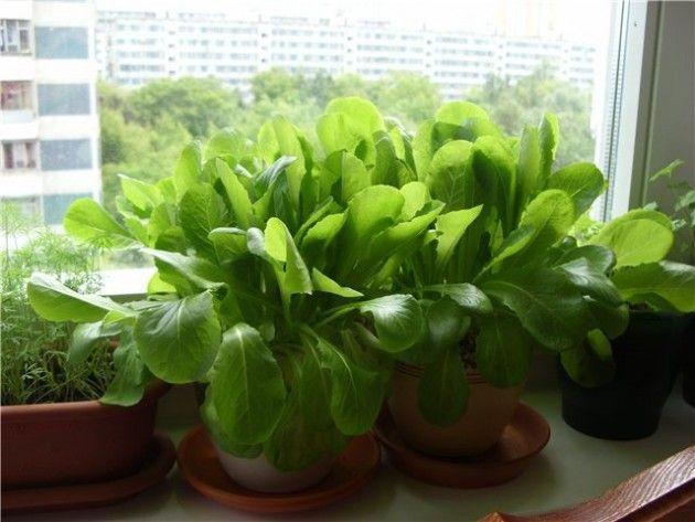 Мини-огород в квартире: как вырастить овощи, зелень и даже клубнику у себя дома - Colors.life