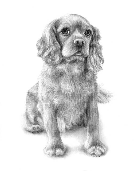 Custom Dog Drawing In Charcoal From Your Photo Hand Drawn
