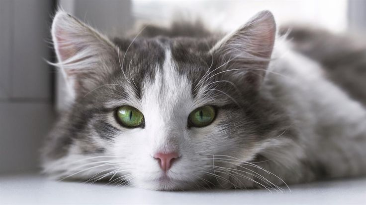 5 sitios para enamorar y enamorarse de felinos  5 lugares para conocer y enamorarse de los gatos Stocksnap.io