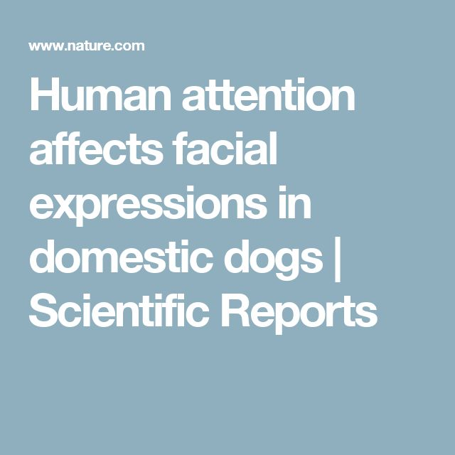 Human attention affects facial expressions in domestic dogs | Scientific Reports