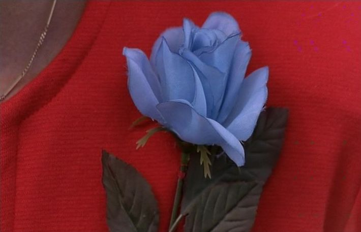 """Blue Rose was a top secret joint task force of the United States military and Federal Bureau of Investigation, formed in the years after the official closure of Project Blue Book in 1970 to investigate cases of a paranormal nature, as well as """"troubling abstractions"""" that Project Blue Book could not resolve. The name originated in 1975 from the last words of the tulpa of Lois Duffy: """"I'm like the blue rose."""" Subsequently, cases believed to have some bearing on this mis..."""