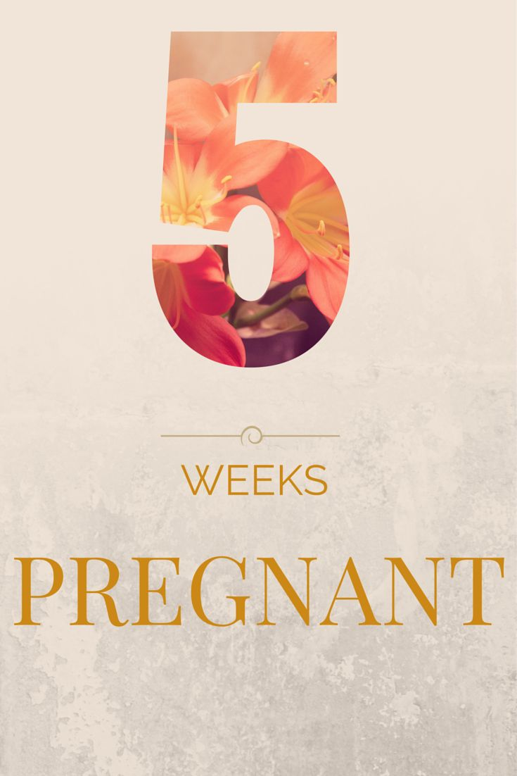 5 weeks pregnant - update - MAMA OCONNOR