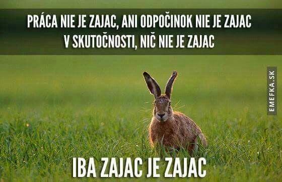 Zajac krédo