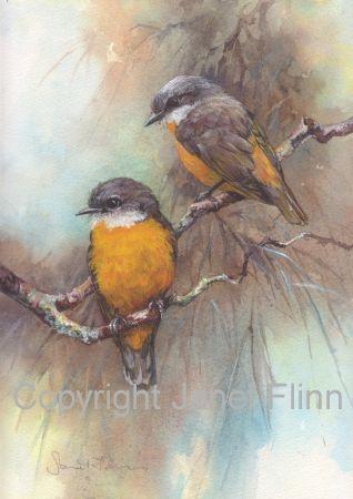 Australian Yellow Robin picture
