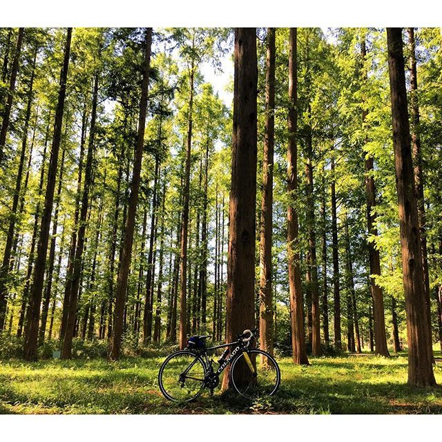 【miu8823】さんのInstagramをピンしています。 《Scent musim gugur Santai ♡ : : :  #colnago #colnagoworld #colnagobikes #colnagostradasl #コルナゴ#ロードバイク#秋#気持ちいい #気持ちいい季節 #森林 #水元公園 #rapha #ロードバイク女子》