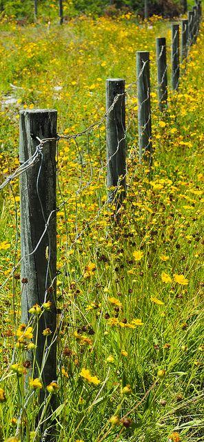 +++                 fence line | Flickr - jaysea007
