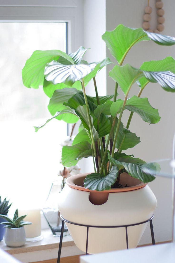 Kathrin von Innenleben design hat drei Tipps aufgelistet, die Dir dabei helfen, Dich mehr um Deine Zimmerpflanzen zu kümmern und sie nicht zu vergessen!