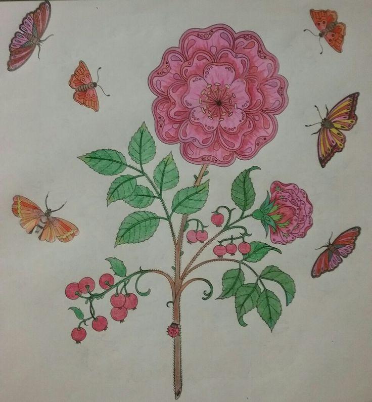 The garden flourishes# flowers bloom