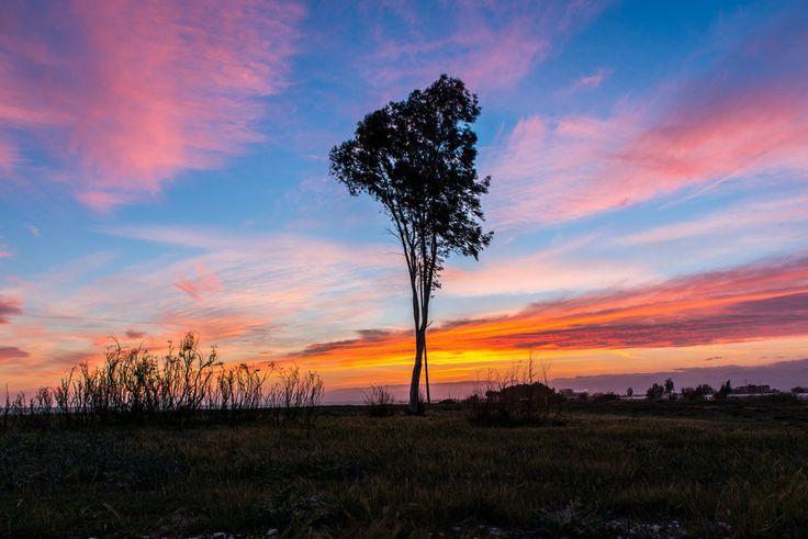 Photo One Tree by Carlo Murenu on 500px
