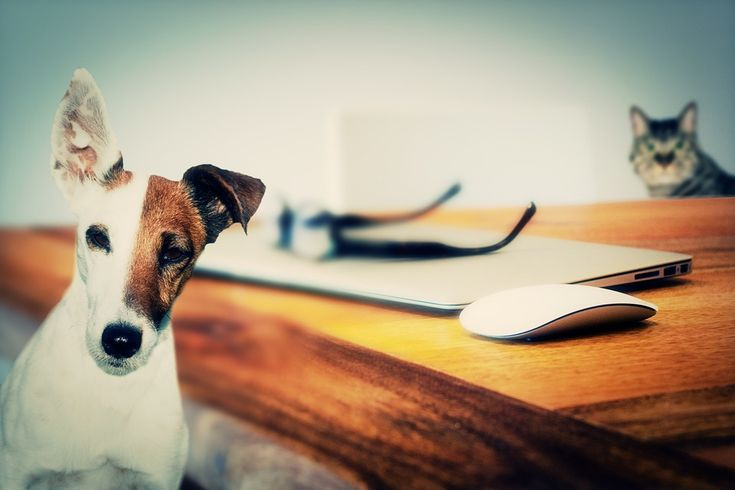 Training tips: Kam pes smí a nesmí - VIDEO UVNITŘ