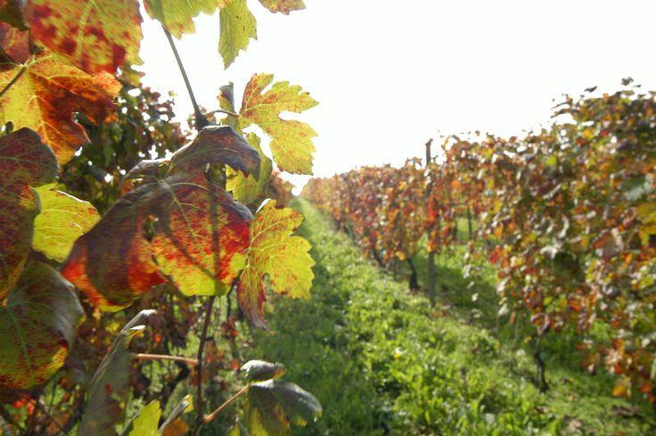Wine Wedding in Piedmont