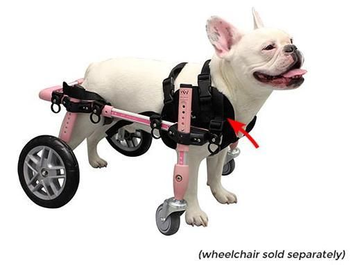 Front Neoprene Harness For Quad Walkin Wheels Wheelchair Dog
